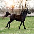 Bild von einem Pferd